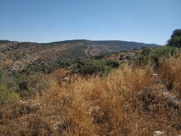 טבע בארץ ישראל